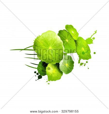Watercress Isolated On White Background. Watercress Is An Aquatic Plant Species With The Botanical N