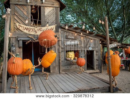 Pumpkins Dancing At An Old-fashioned Hoedown Dance