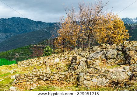 Three Holm Oak With Its Autumnal Leaves Next To The Ruins Of The Houses Inside The Walls Dated In Th