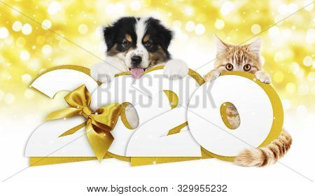 2020 Happy New Year Number Text, Dog Puppy And Cat Pet With Golden Christmas Ribbon Bow Isolated On