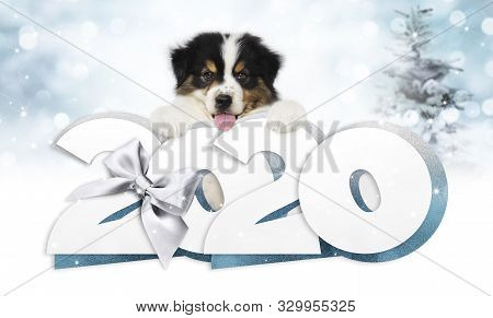 2020 Happy New Year Number Text, Puppy Pet Dog With Silver Christmas Ribbon Bow Isolated On Blurred
