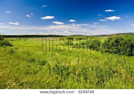 Water Meadow