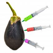 Eggplant with a syringes full of chemicals. Genetic Food Modification, concept. 3D rendering isolated on white background poster