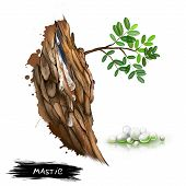 Mastic resin obtained from the mastic tree Pistacia lentiscus. Mastic coming from the tree. In pharmacies and nature shops called Arabic gum and Yemen gum. Herbs and spices collection. Digital art poster