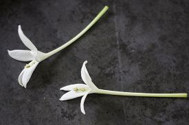 Small White Flower On Grunge Background, Stock Photo
