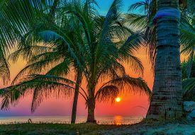 Palm Tree Over Sea Background At Sunset. Thailand, Phuket, Karon Beach