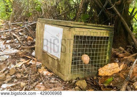 New Zealand January 12, 2016: Predator trap to conserve the kiwi population. Trap protects kiwi from rats.