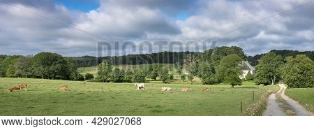 Farm House In Summer Countryside Landscape With Green Meadows And Cows In French Ardennes Near Charl