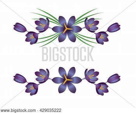 Crocus Vignettes, Decorative Lines With Flowers. Vector Ornament.