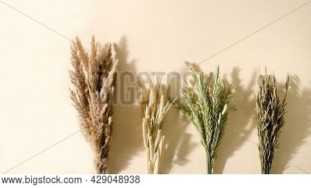 Meadow, Dry, Grass In Bouquets Lies On A Beige Background. Timothy Grass, Meadow Fescue, Awnless Bon