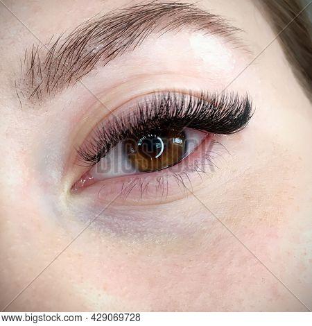 Eyes With Extended Eyelashes Artificial Eyelashes Fashion And Beauty.