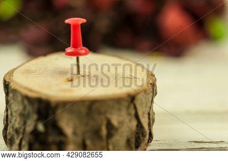 red thumbtack stuck in crosscut hardwood tree