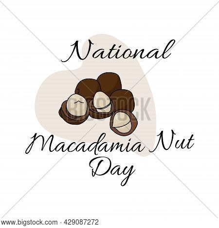 National Macadamia Nut Day, Useful Popular Nut In Shell And Without For A Postcard Or Banner Vector