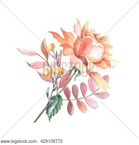 Watercolor Tea Rose With Leaves. Watercolour Floral Composition On A White Background.