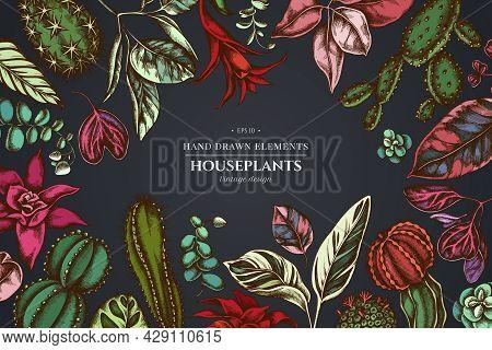 Floral Design On Dark Background With Ficus, Iresine, Kalanchoe, Calathea, Guzmania, Cactus Stock Il