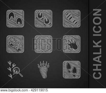 Set Human Footprints Shoes, Bear Paw, Alligator Crocodile, Bird, Fox, And Horse Icon. Vector