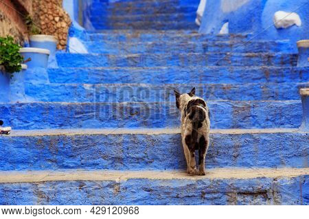 View Of The Cat In Medina Quarter In Chefchaouen, Morocco. The City, Also Known As Chaouen Is Noted
