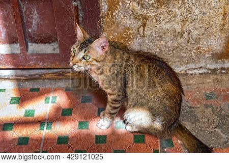 Portrait Of The Adorable Young Street Cat In The Fez, Morocco.