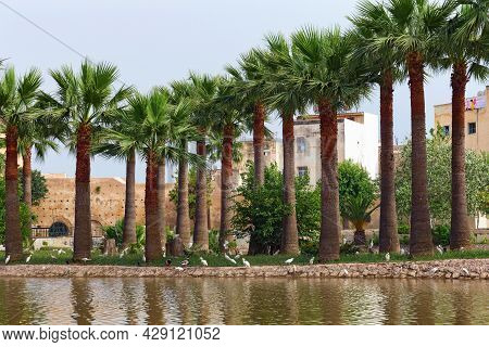 Row Of The Large Palm Trees Near Water In The Famous Jnan Sbil Gardens In Fez. Morocco.