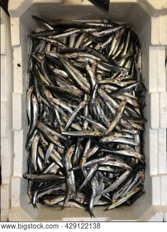 Fresh Fish In Box. Fish Ready For Sale In Market