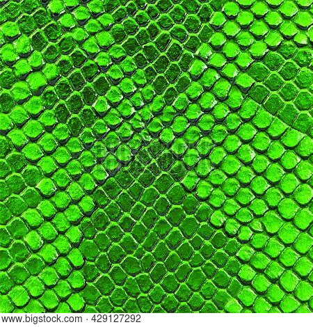 Green Snake Skin Texture. Reptile And Serpent Scales Surface. Graphic Resource And Background. Vecto