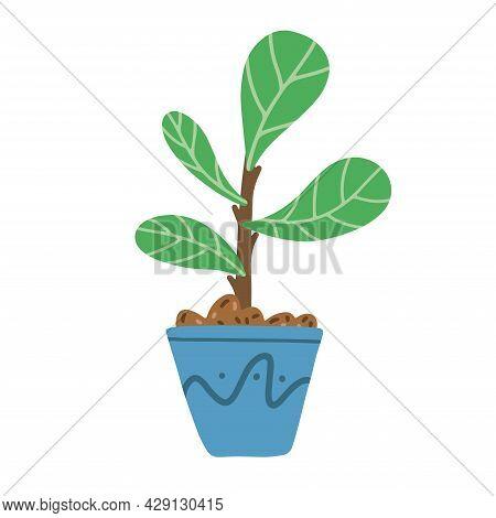 Fiddle Leaf Tree In Ceramic Pot On White Background. Ficus Lyrata Vector Illustration.