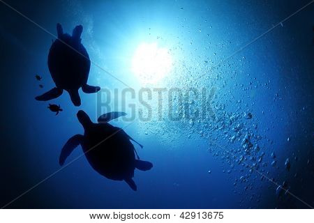 Collage of underwater world with sea turtle family swimming in the depth