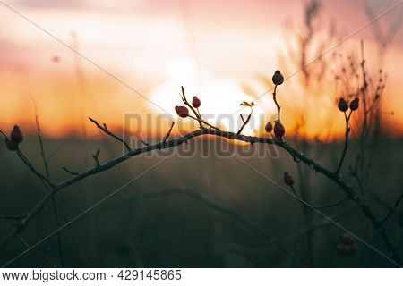 Peaceful View Sunset Light 2. High Quality Beautiful Photo Concept