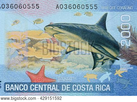 Shark And Coral Reef Close Up On Costa Rica Banknote.