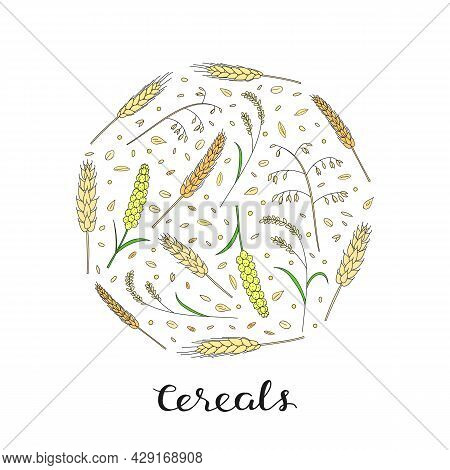 Hand Drawn Cereals And Grains In Circle Shape With Lettering. Barley, Wheat, Rice, Oats, Rye, Millet