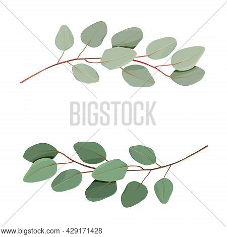 Vector Eucalyptus Leaves Frame Isolated On White Background With Place For Your Text. Wreath Made Of