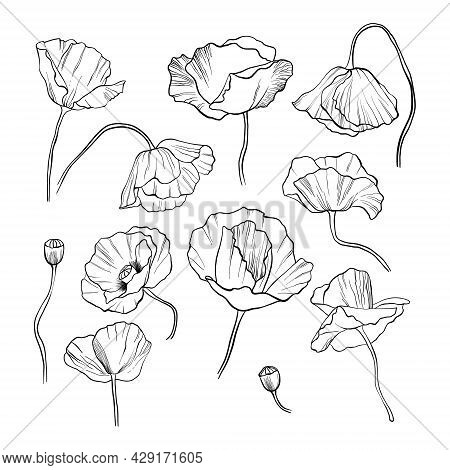 Set Of Poppy Flowers, Hand-drawn With A Black Line On A White Background. Monochrome Sketch Of Wildf