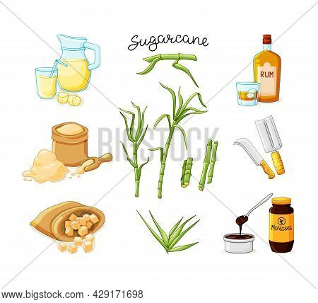 Cane Sugar Stalks And Leaves Set. Freshly Squeezed Sugar Cane Juice In A Jug And Glass, Cubes, Glass