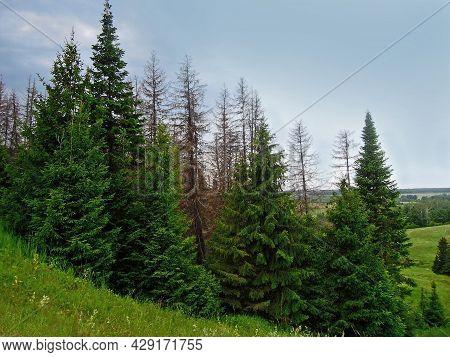 Spruce Forest Near By Coast Of Lake Morskoy Glaz Or Sea Eye, Village Shariboksad, Mari El Republic,