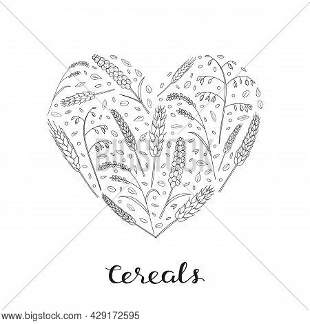 Hand Drawn Cereals And Grains In Heart Shape With Lettering. Barley, Wheat, Rice, Oats, Rye, Millet.