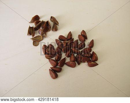 Shelled Beechnuts From The European Beech On A Wooden Board
