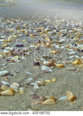 Blurred Sandy Beach With Many  Shell Of The Bivalve Mollusk