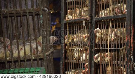 Chickens Suffer In Cramped Cages At A Slaughterhouse. Animal Cruelty Concept