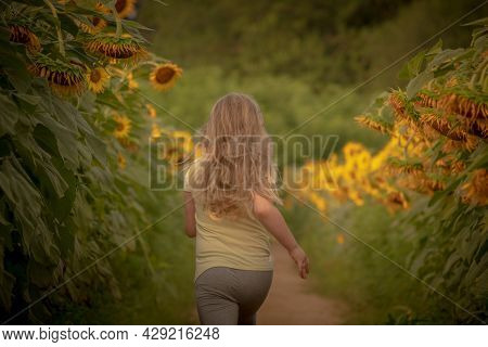 A Young Blond Haired Girl Joyfully Runs Among The Sunflowers At Dorothea Dix Park In Raleigh, Nc.