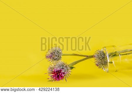 Red And Green Burdock Burdock Flower On A Green Stem Lies In A Glass Bottle