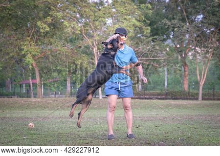 Dog Rottweiler Jump Mid Air, Going After Its Chew Dog Held By Man Owner. Outdoor Park Setting.
