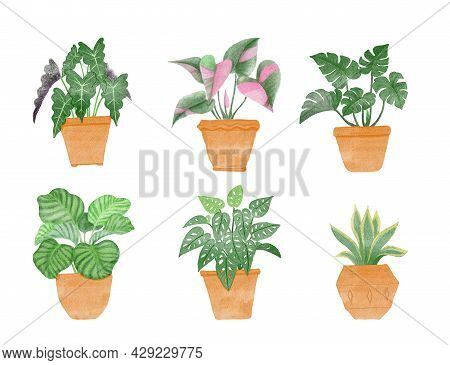 Green Leaves Tropical Indoor Plant In Brown Clay Pot, Illustration Watercolor Drawing, Set Of Housep