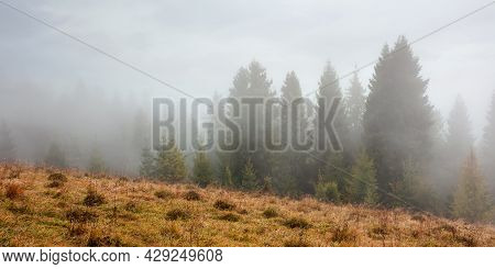 Spruce Forest On The Hill At Foggy Sunrise. Weathered Yellow Grass On The Meadow. Mysterious Atmosph