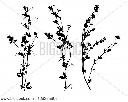 Set Of Wildflowers Silhouettes Isolated On White Background.