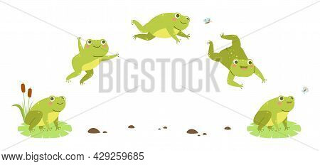 Frog Jump. Funny Toad Step Hop Sequences, Amphibian Character Moving Animation Phases, Jumping Water