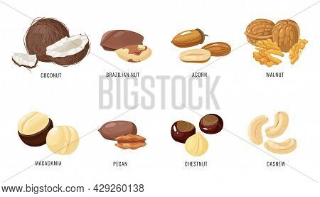 Nuts And Seeds. Various Nut And Seed In Shell And Peeled, Coconut And Brazilian, Acorn And Walnut, M