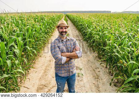 Proud Farmer Is Standing In His Growing Corn Field. He Is Satisfied Because Of Successful Season.