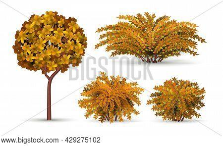 Realistic Tree And Bush. Autumn Shrub, Seasonal Hedge Elements. Isolated Garden Plants And Topiary F