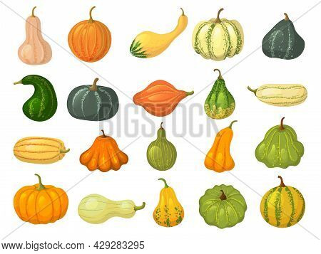 Squash Collections. Organic Natural Healthy Food Autumn Vegetables Pumpkin Collection Isolated Recen