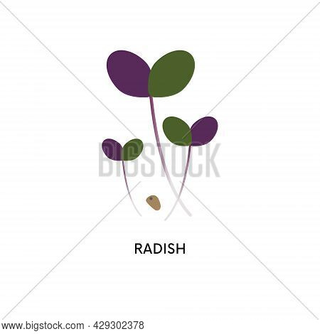 Radish Microgreens And Seed Vector Illustration. Superfood, Home Gardening, Greens. Can Be Used For